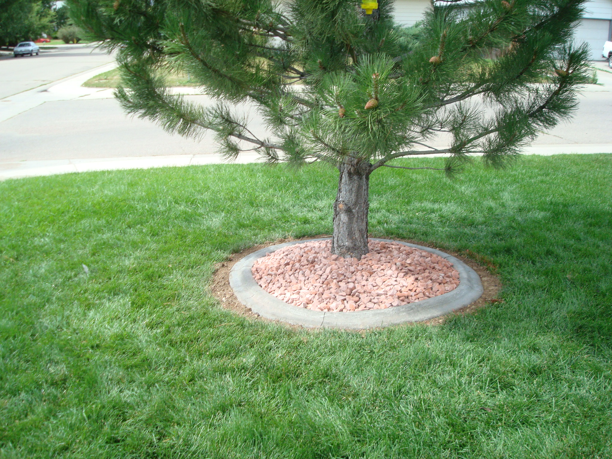 Concrete Tree Ring